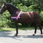 Groninger paard:Grada GrP.F Model 07.1321