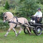 Babel 1ste best gereden aanspanning Nederlands Fjordenpaarden Stamboek