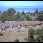 Mustang, foto door Bureau of Land Management