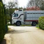 Chantal Rijners Paarden- & Ponytransport